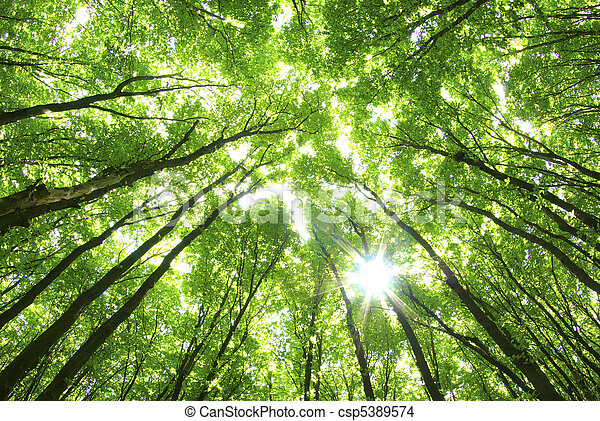 tło, zielone drzewa - csp5389574