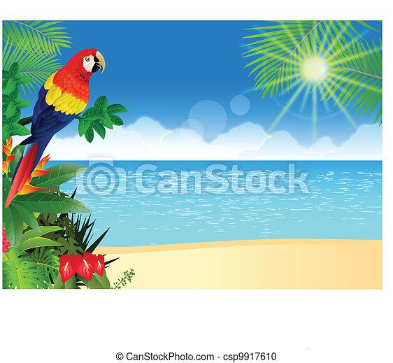 tropikalny, ara, plaża, backgroun - csp9917610