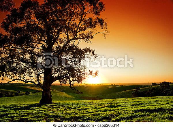 wiejski, zachód słońca - csp6365314