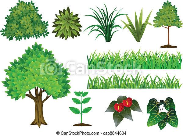 zbiór, drzewo, roślina - csp8844604