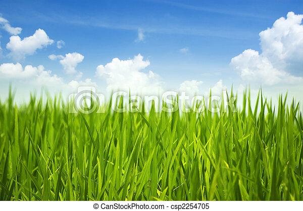 zielona trawa, niebo - csp2254705
