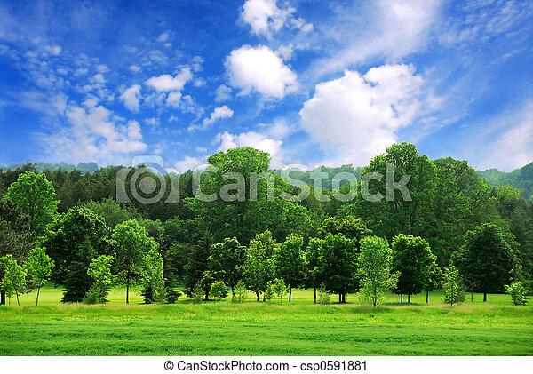 zielony las - csp0591881